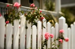 Pink blooming flowers growing around a white picket fence. Photo was taken in Baton Rouge.